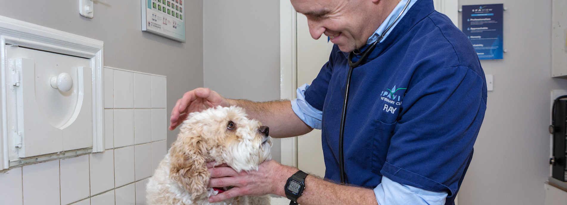 Spa View Veterinary Clinics